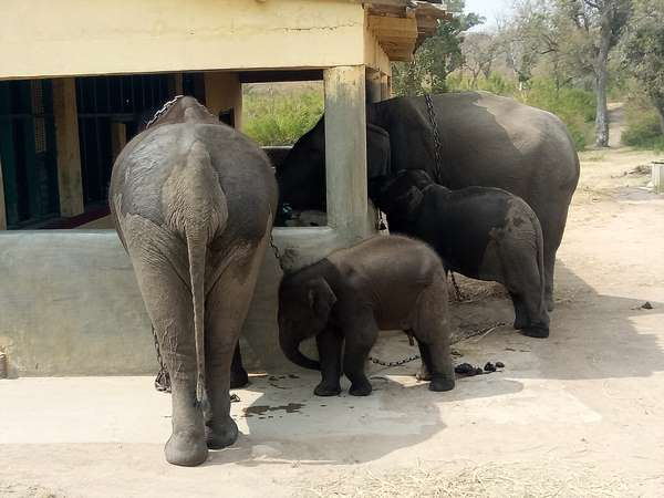 Chamarajanagar Domestic Elephants To Shift To Other Place To Cut Expenditures