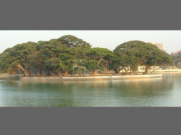 Even animal can't drink Bengaluru lake water: Report