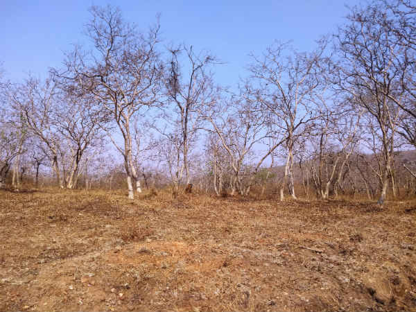 Bandipur forest is dried and facing water problem