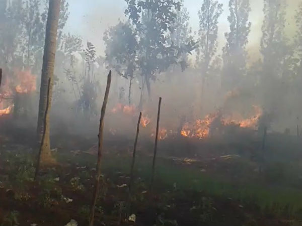 farmer-s-field-caught-fire-20-acre-land-burnt