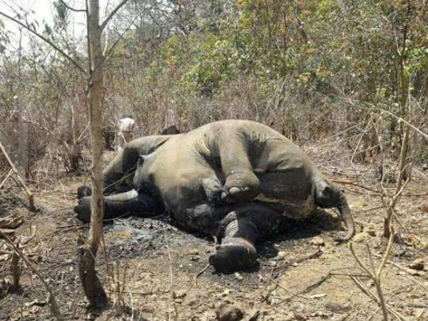 Elephant Dies At Mundgod Uttara Kannada