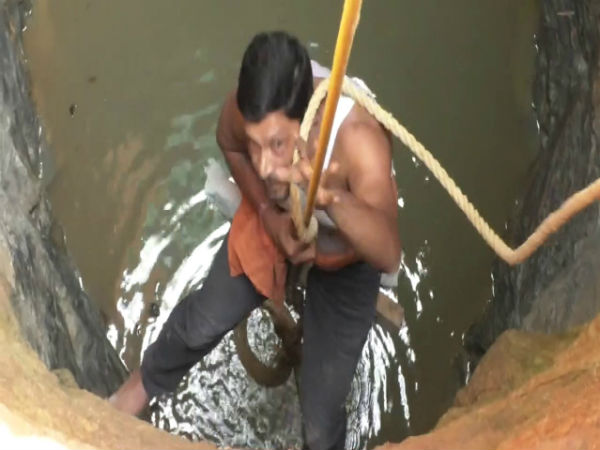Snake catcher rescues cobra from well