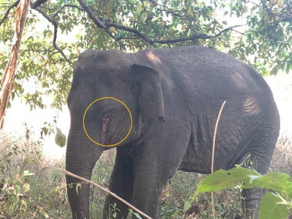Elephant Dies At Sirsi Uttara Kannada