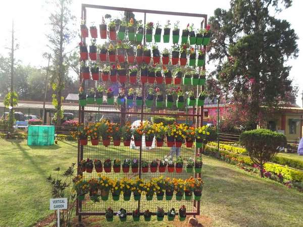 Madikeri Flower Show In Rajas Seat Attracts Many People