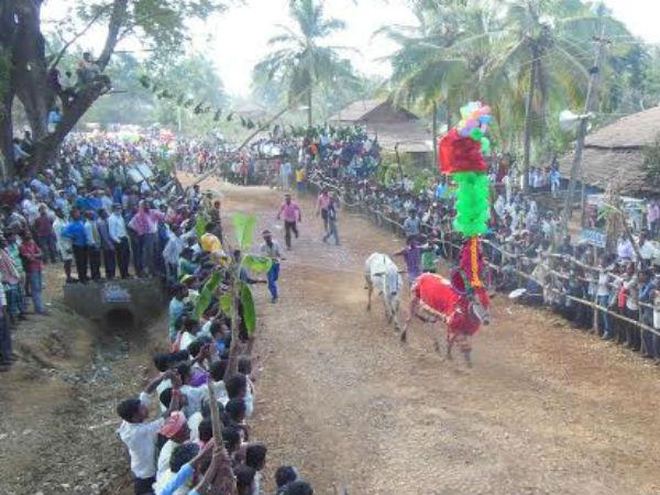 Suggi Huggi Cultural Program In Mangaluru