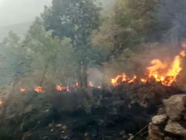 Fire Breaks Out In Tamil Nadu Forest Manay Dead
