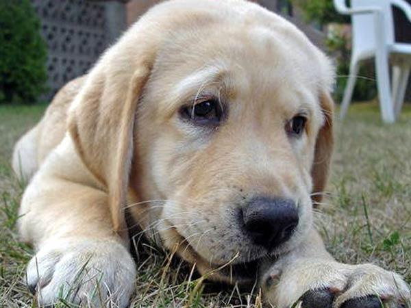 Kohlis Pet Dogs Get License In Bangalore