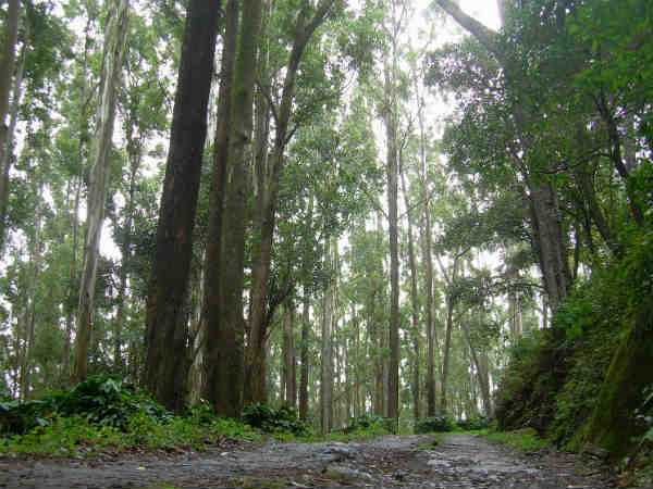 Forest area expanded in Karnataka