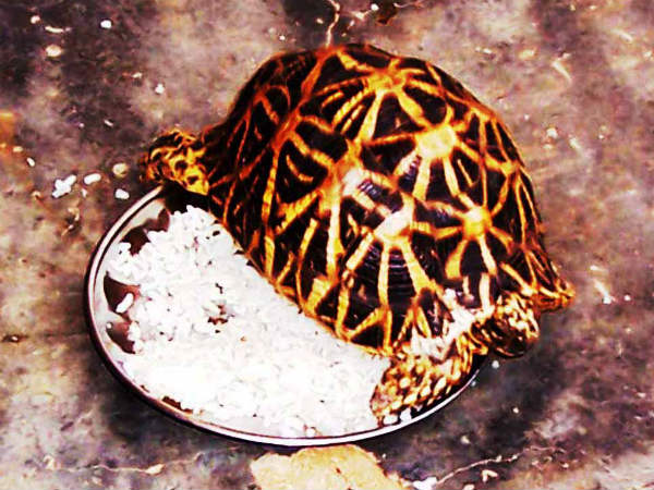 Superstitious belief and Star Tortoise, memories of Sa Raghunatha