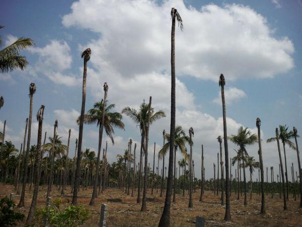 Dakshina Kashi Hiriyur Changed As Famine