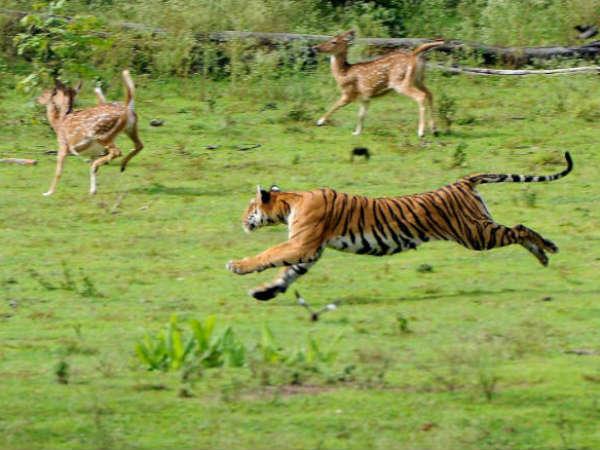 Bandipura Forest Rs1000 Penalty For Selfie