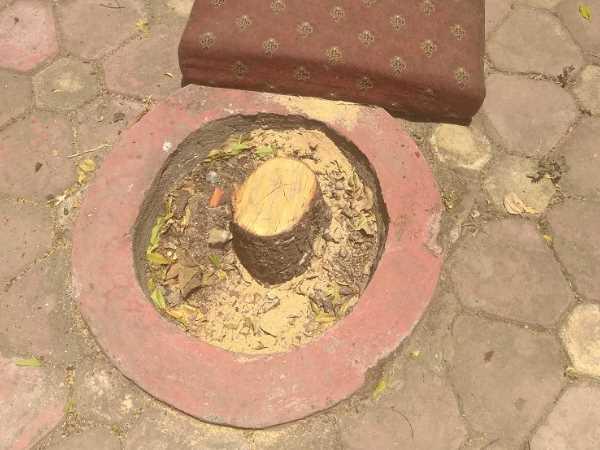 ಬೆಂಗಳೂರು ವಿವಿಯಲ್ಲಿ ಶ್ರೀಗಂಧದ ಮರ ಕಳವು ತಡೆಗೆ ವಾಚ್ ಟವರ್