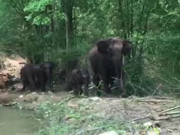 group of elephants tried to attack on tourists in chikkamagaluru