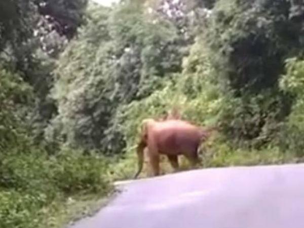 Again Elephant Found In Agumbe Thirthahalli