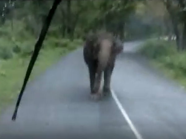 elephant attacked bus to rescue its baby