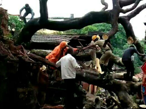 As many trees were damaged by rainfall Mangalore