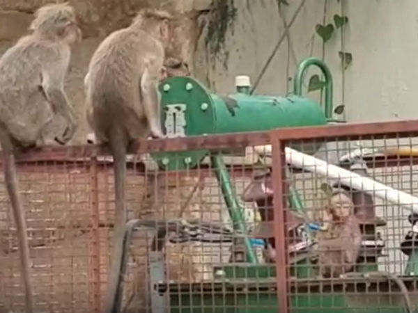 baby monkey fell on electrical transformer rescued by another monkey
