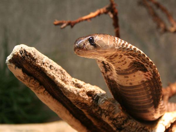 Antihill And Snake Inside The House Family Left The Own House