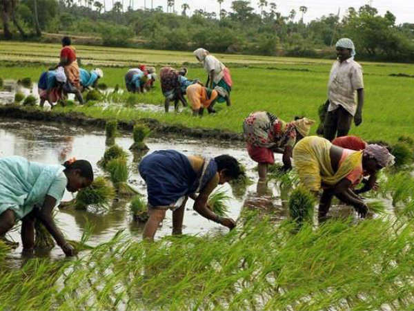 Chant mantra for better yield: Goa agriculture minister's advice to farmers
