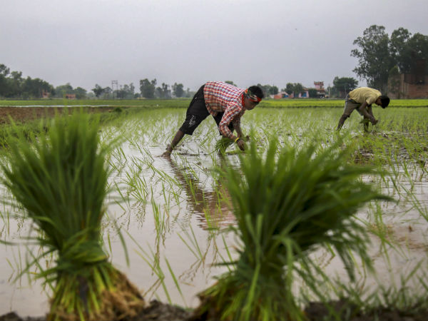 Why farmers are showing their back to agriculture?