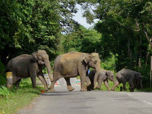 Night traffic may ban in MM Hills Wildlife Sanctuary