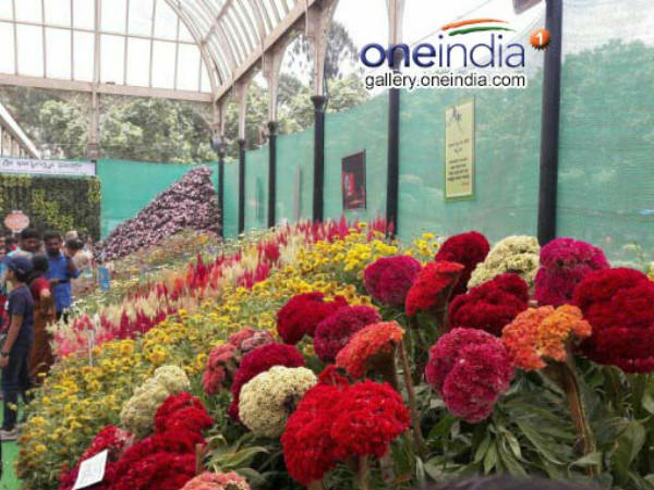 Garbage free flower show at lalbagh