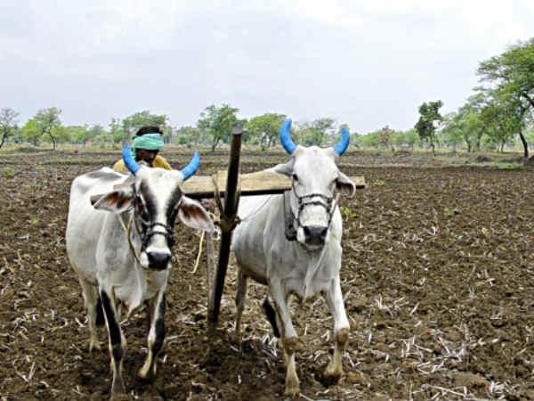 ಕೊಪ್ಪಳ: ಸಂಪೂರ್ಣ ಸಾಲ ಮನ್ನಾಕ್ಕೆ ಆಗ್ರಹಿಸಿ ರಾಷ್ಟ್ರೀಯ ಹೆದ್ದಾರಿ ಬಂದ್