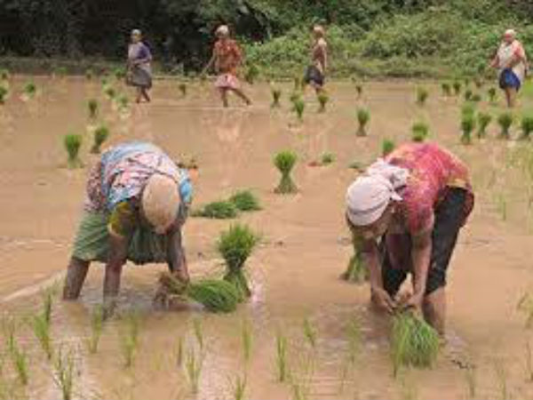 Agriculture Labour scarcity in Dakshina Kannada
