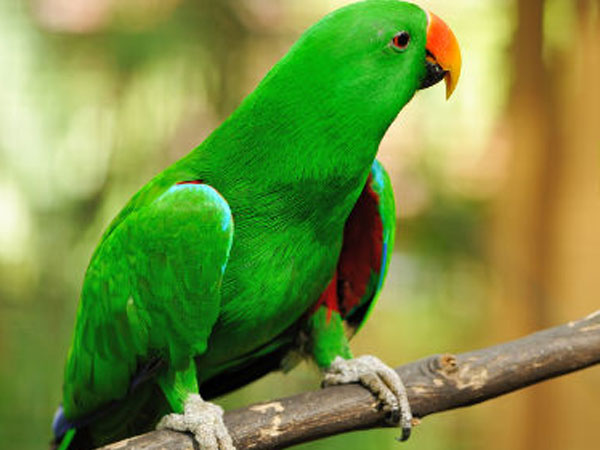 Many cheated on purchase of parrot through online