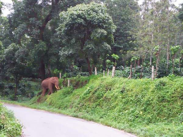 Elephant appears in Vatekaan