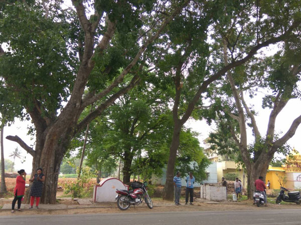 Residents oppose proposal to axe 171 trees to rebuild BDA complex