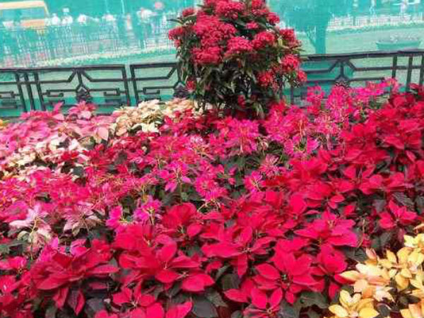 Strong opposition for Lalbagh flora exhibition fee hike