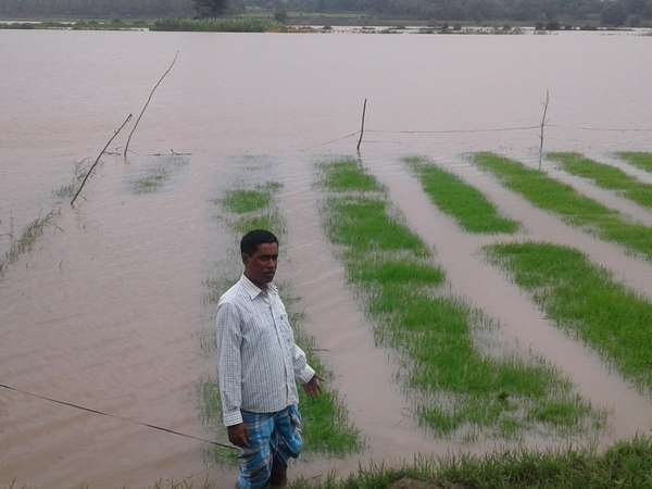 Heavy rainfall in Kerala leads to huge loss for the Mysuru farmers