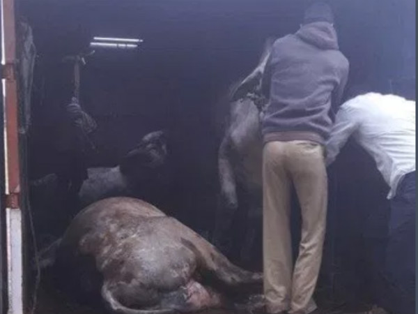 Police have seized around 20 livestock