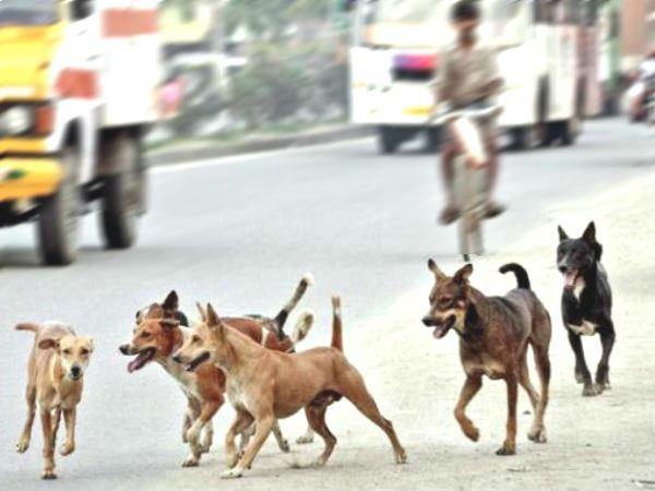 Stray dogs attack four years boy