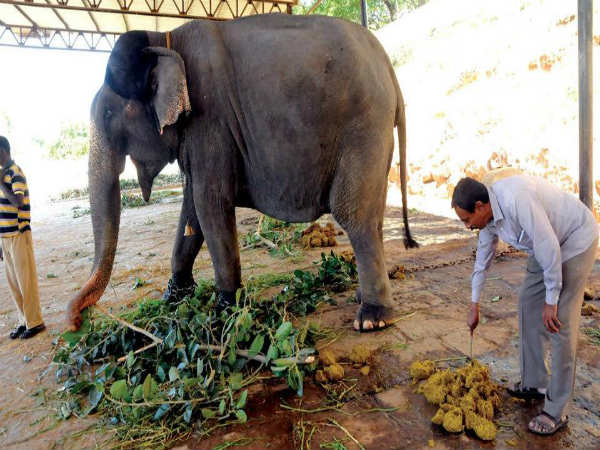 Full demand to Elephants shit in Mysuru