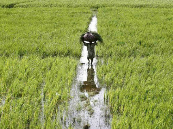 Scarcity threat to Rabi crop in 16 district