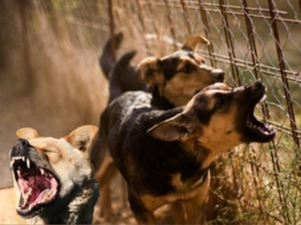 Stray dogs attack on two students in Bengaluru