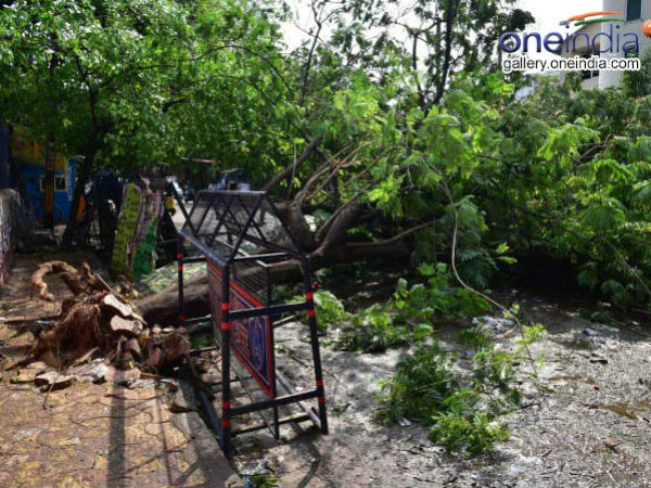 More than 300 trees fell down in Bengaluru