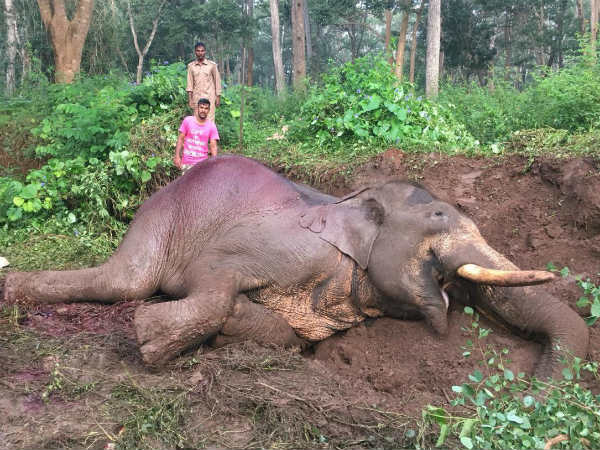 Elephant Ranga was died when a private bus collided