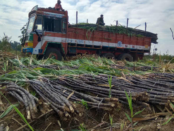 Sugarcane Farmers Protest In Belagavi