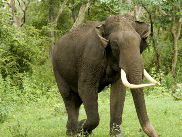 Villagers near Nagarahole struggling to save crops from elephants