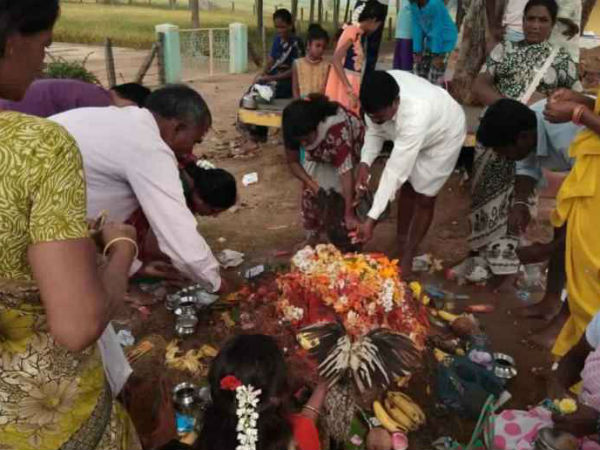 Devotees given chickens rather than milk to aralikatte hutta