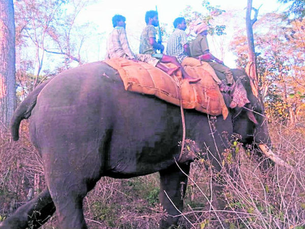 5 elephants came to h d kote for catch the tiger
