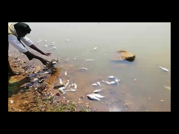 Fishes dead in Malladevanahalli lake