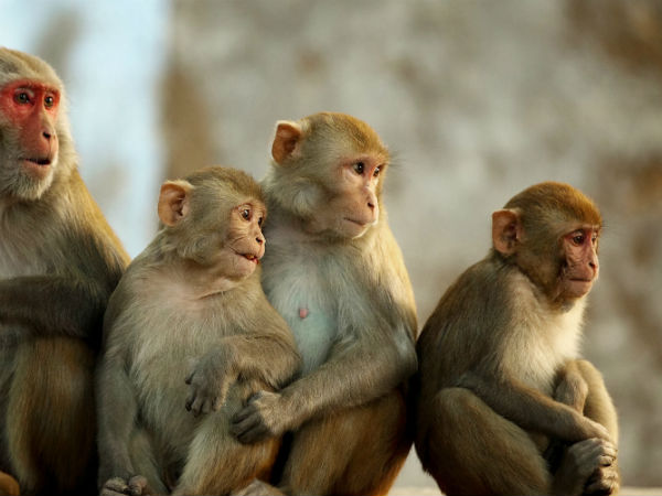 Death of two people in Thimmana Hosahalli Hadi not from Monkey Fever