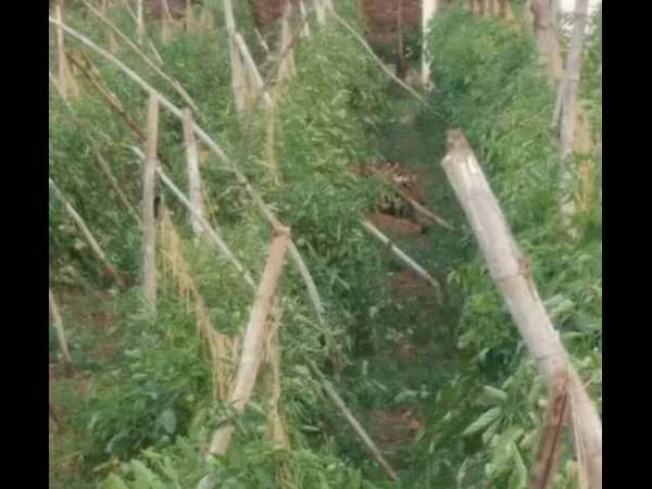 Tiger prowling in Gundlupet injures forest personnel