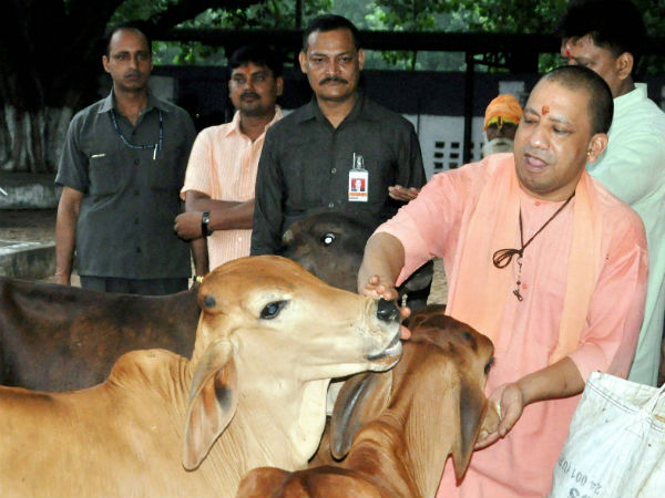 Uttar Pradesh government allocated 613 crore for cow welfare in budget