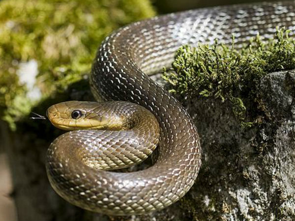 A man dies when catches snake at hotel in HD Kote