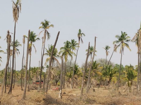 Farmers gardens are dried up in the Hiriyur taluk